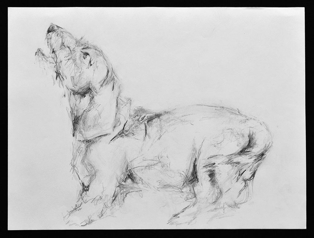 barking-dachshund
