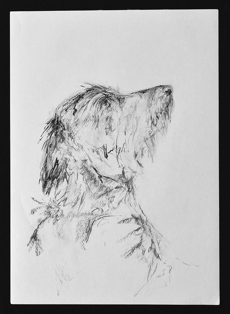 begging-dachshund