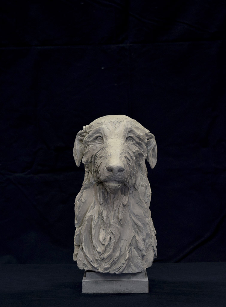 deerhound-front