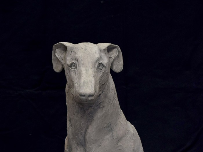 greyhound front