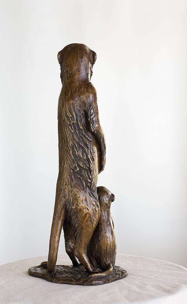 meerkat_back