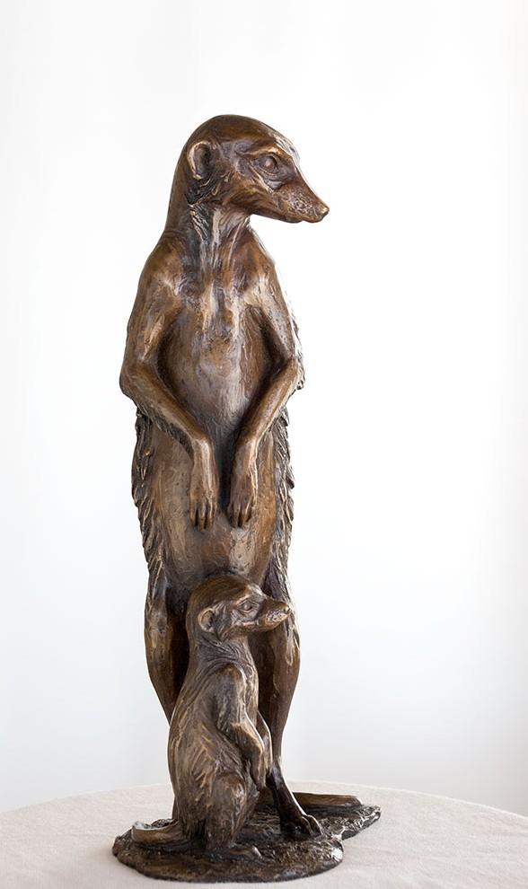meerkat_front