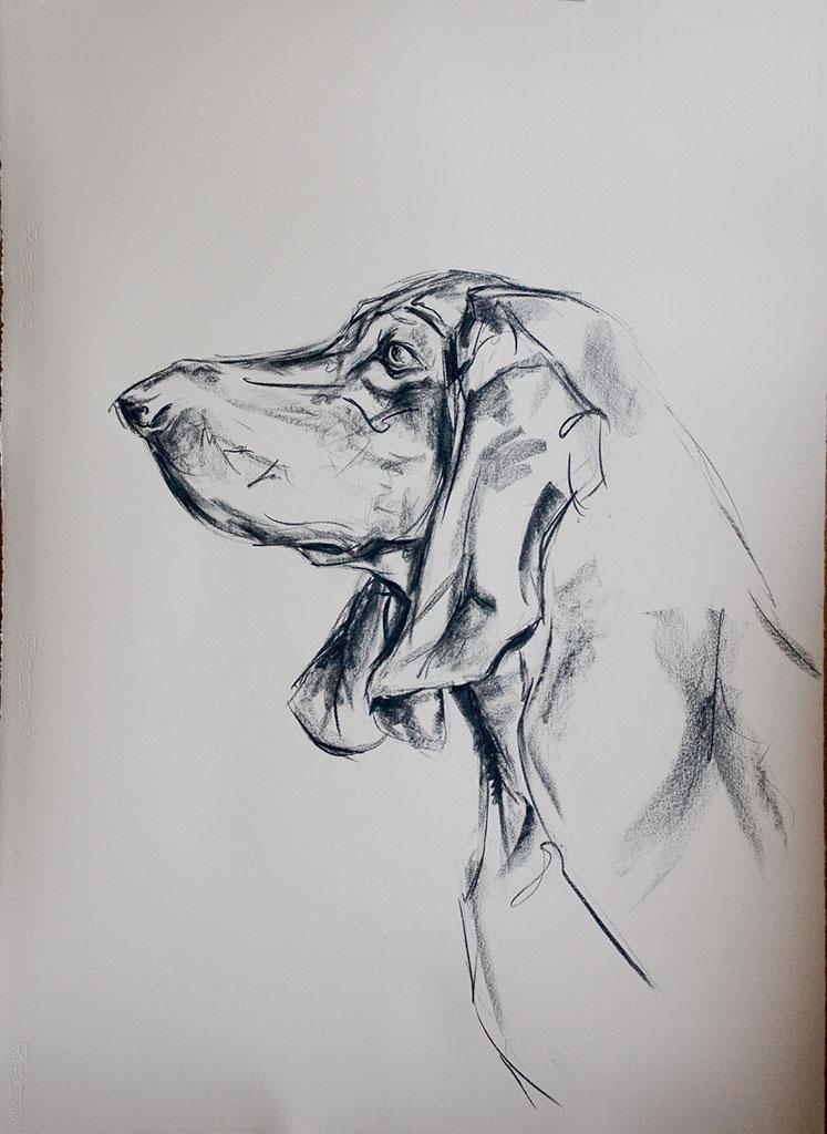portrait-bassett