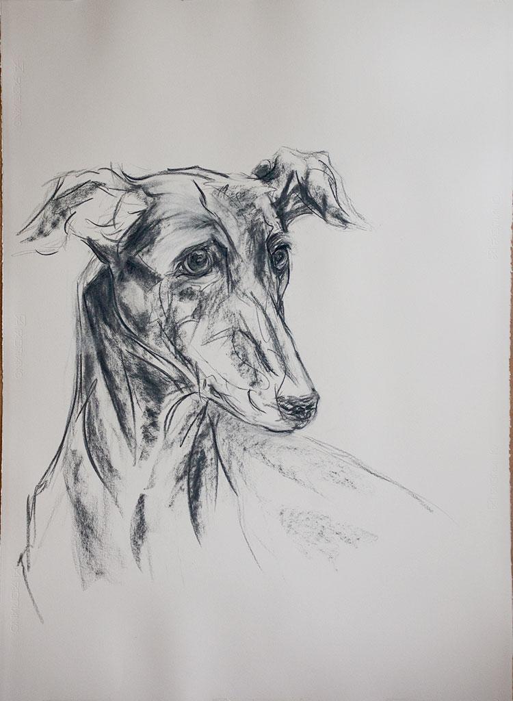 portrait-hound