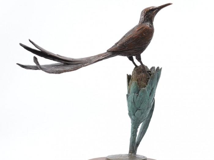 sugarbird_1