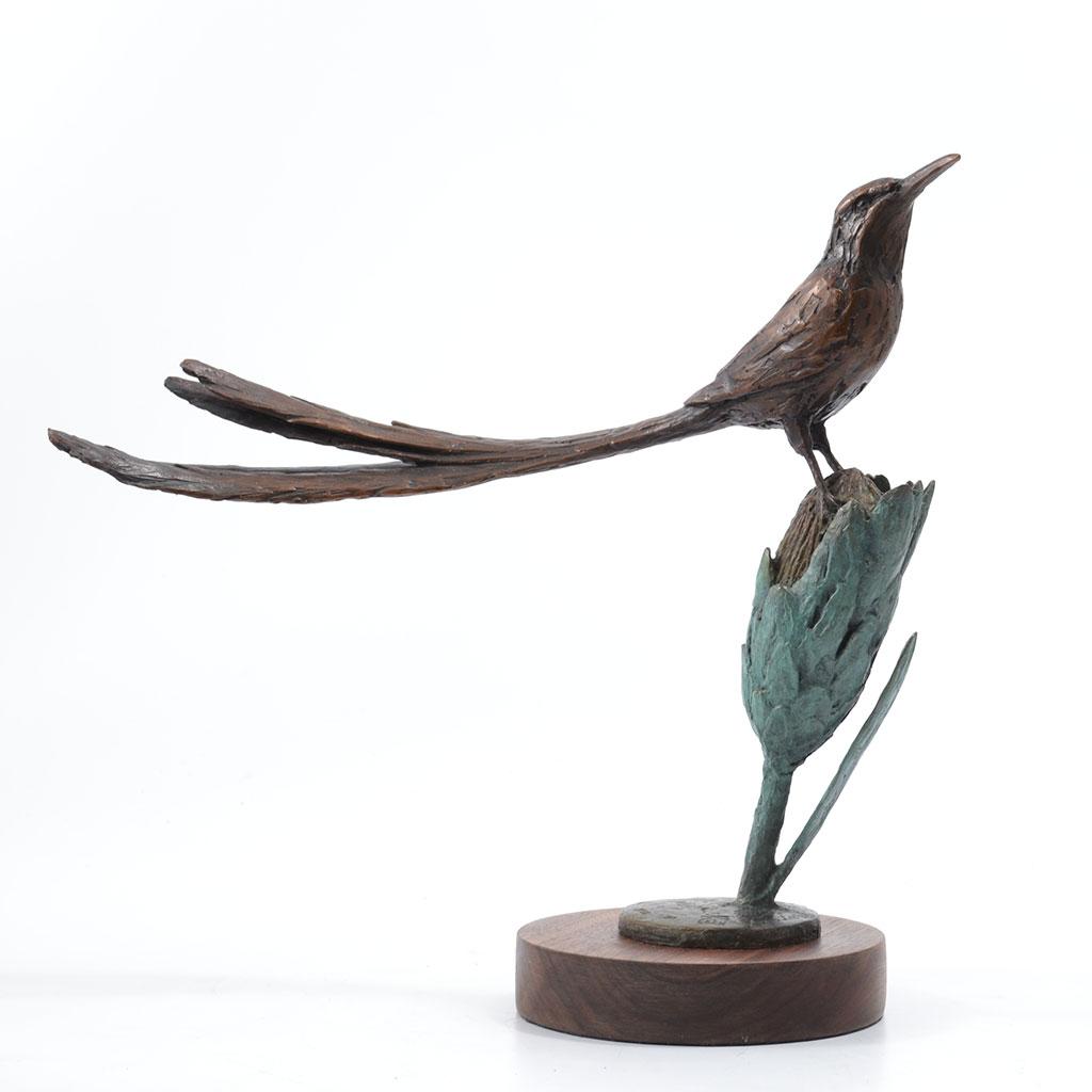 sugarbird_3
