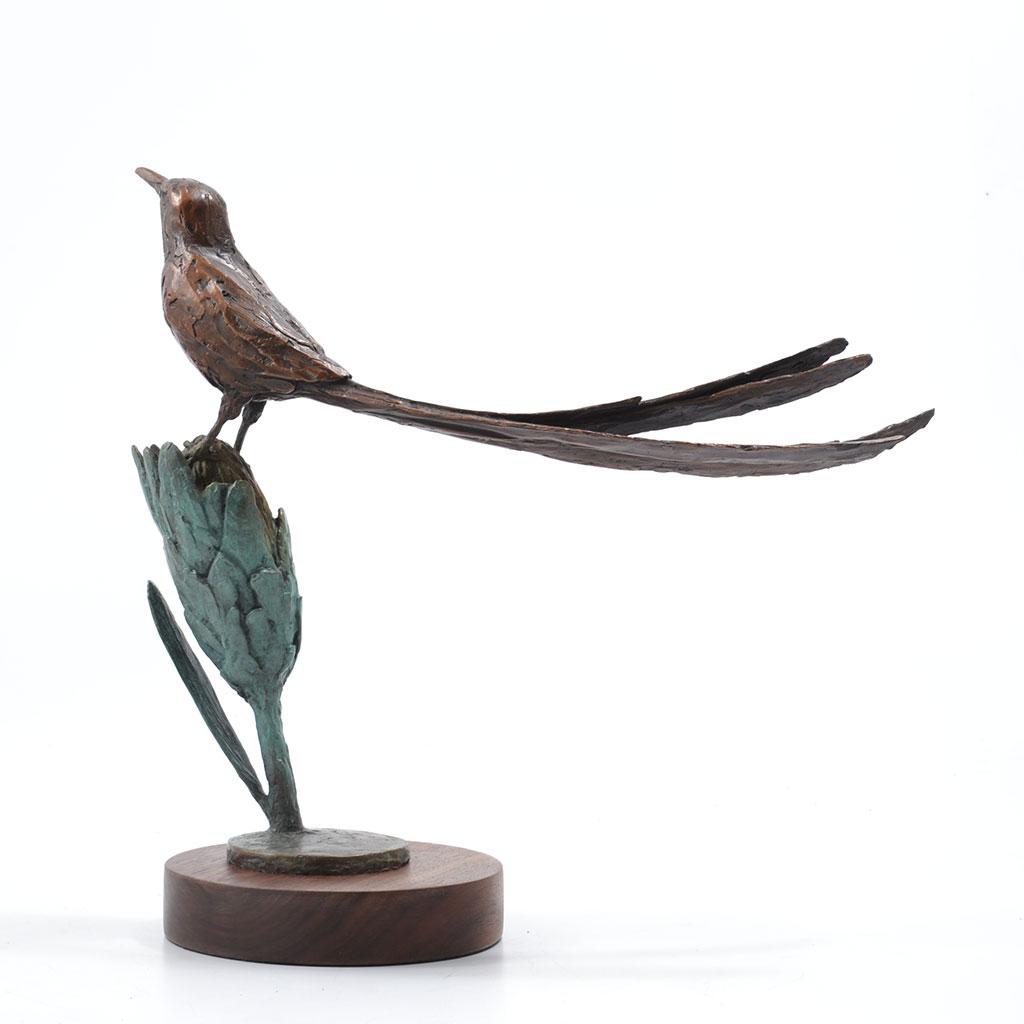 sugarbird_4