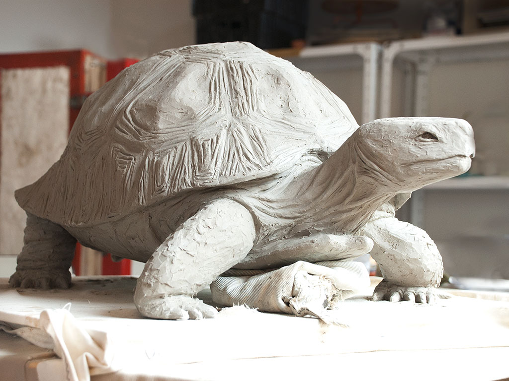 tortoise-angle