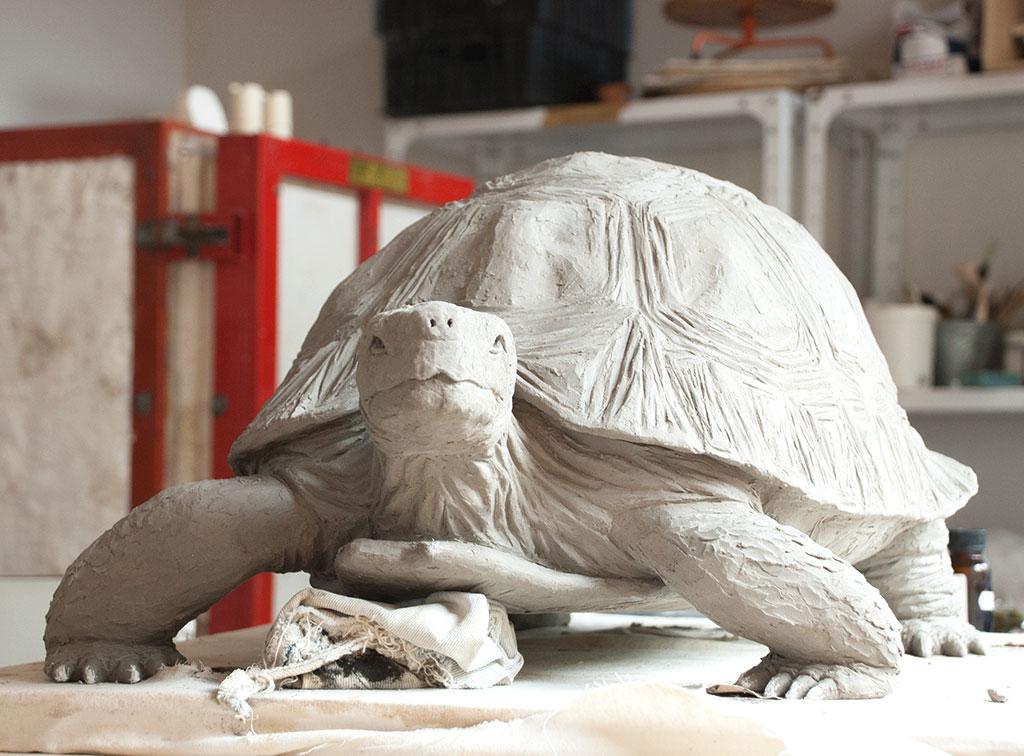 tortoise-front